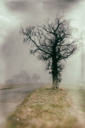 Rural Country Scene on Foggy Winters Morning in Suffolk Photographic Print by Tim Kahane