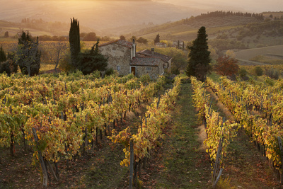 Farmhouse in Vineyard at Sunset Photographic Print by Gary Yeowell