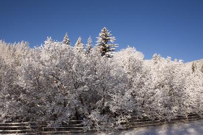 Usa, Colorado, Winter Landscape Photographic Print by John Kelly