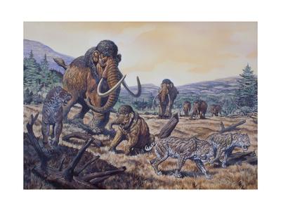 A Herd of Woolly Mammoth and Scimitar Sabertooth, Pleistocene Epoch Prints