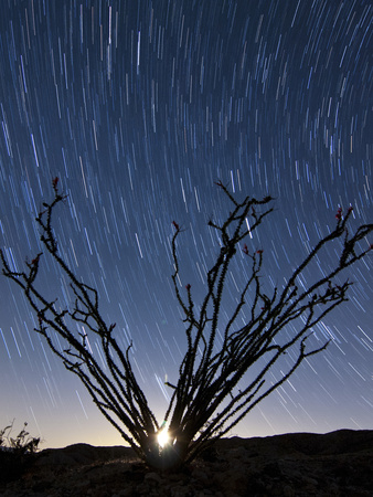 The Setting Moon Is Visible Through the Thorny Branches on an Ocotillo, California Photographic Print