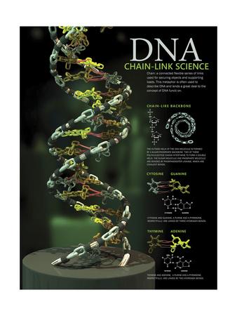 3D Poster Illustration of Dna Components Functionally Compared to a Chain Link Poster
