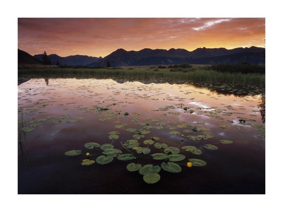 Sunrise over Granadier Range, Molas Pass, Weminuche Wilderness, Colorado Posters by Tim Fitzharris