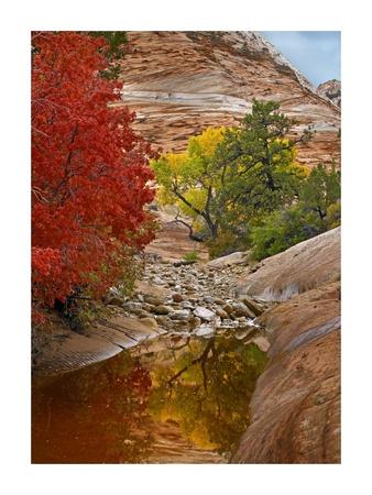 Maple and Cottonwood autumn foliage, Zion National Park, Utah Prints by Tim Fitzharris