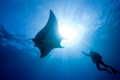 Pacific Manta and Scuba Diver Stampa fotografica di Stephen Frink