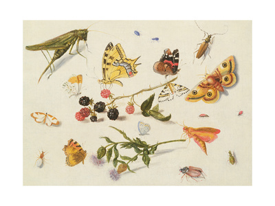 Study of Insects, Flowers and Fruits Giclee Print by Ferdinand van Kessel