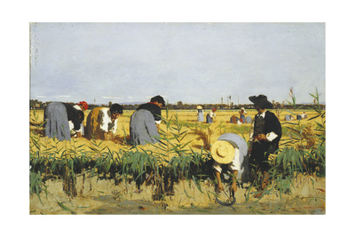 Harvesting Rice in Lowlands of Verona, 1878 Giclee Print by Giacomo Favretto