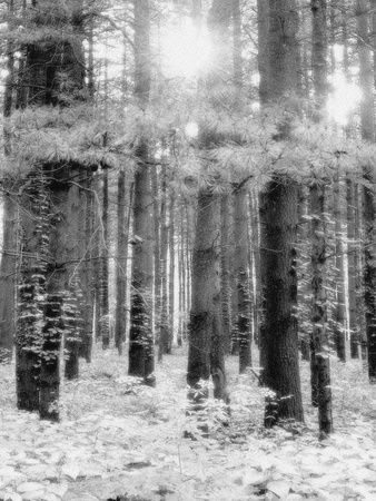 Treetrunks in Cataract Falls State Park forest, Indiana, USA Photographic Print by Anna Miller