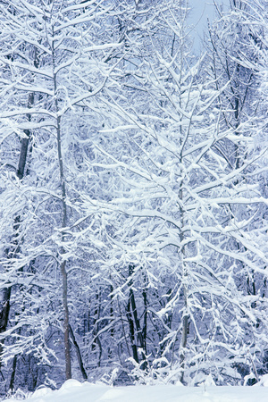 Winter in a park, Indianapolis, Indiana, ISA Photographic Print by Anna Miller