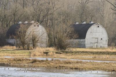Washington State. Two Barns, at the Nisqually Wildlife Refuge Photographic Print by Matt Freedman