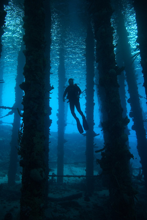 Silhouette of Scuba Diver under Pier. Curacao, Netherlands Antilles Photographic Print by Barry Brown