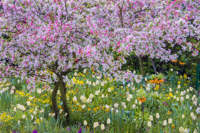 France, Giverny. Springtime in Claude Monet's Garden Photographic Print by Jaynes Gallery