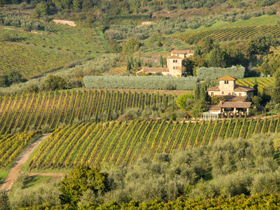 Italy, Tuscany. Vines and Olive Groves of a Rural Village Photographic Print by Julie Eggers