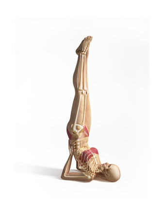 Woman Doing Gymnastics on the Floor, with Skeleton Superimposed Posters