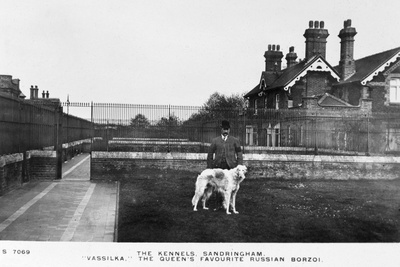 Vassilka, Pet Dog of Queen Mary of Teck Photographic Print