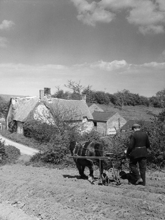 Using a Seed Drill Photographic Print
