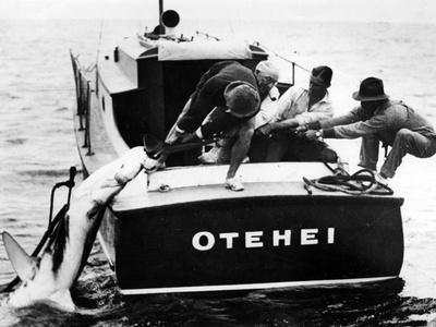 Swordfish Haul! Photographic Print