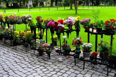 Row of Flowers in Sweden Photo Print Poster Prints