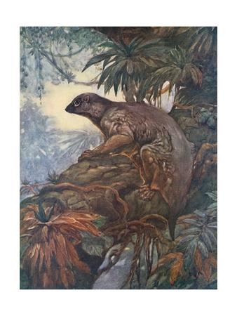 Animal, Cobego 1909 Premium Giclee Print by Winifred Austen