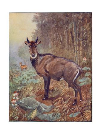 Antelope, Winifred, Nilgha Premium Giclee Print by Winifred Austen