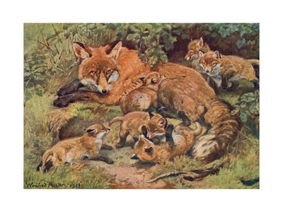 Fox, Vixen and Cubs 1909 Premium Giclee Print by Winifred Austen
