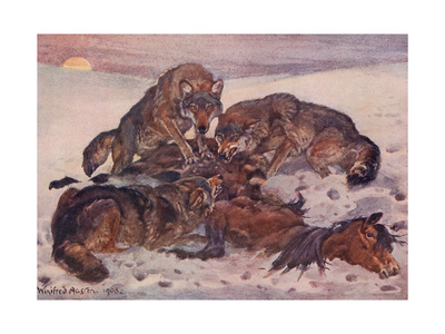 Three Wolves Eating a Dead Horse Premium Giclee Print by Winifred Austen