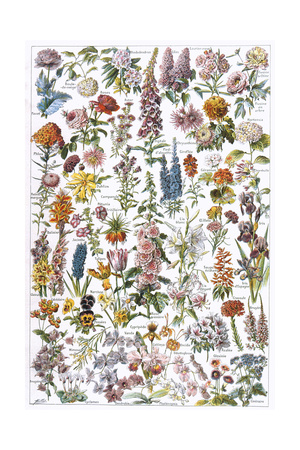 Flowers, Larousse 1913 Giclee Print by A Millot