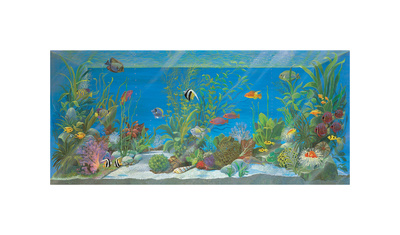 Acquario Giclee Print by Isabella Cuccato