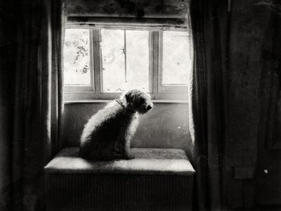 Fozzie Waiting Photographic Print by Tim Kahane