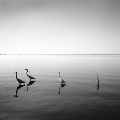 4 Herons Photographic Print by Moises Levy