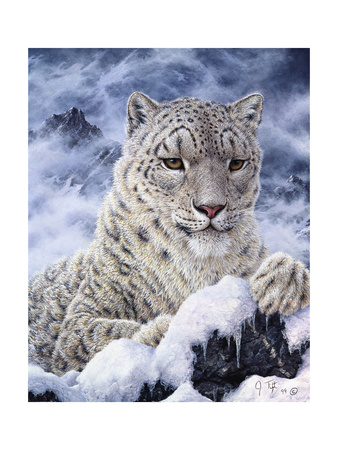 Cat Giclee Print by Jeff Tift
