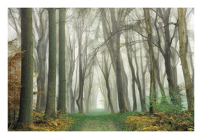 Magic Is Everywhere Posters by Lars Van de Goor