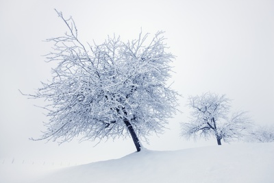 Winter Landscape with Snow Covered Fruit Trees Photographic Print by Frank Krahmer