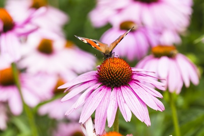 Flowering Garden Photographic Print by Frank Lukasseck