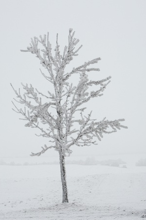 A Solitary Tree Covered with Frost in Hungary Photographic Print by Joe Petersburger