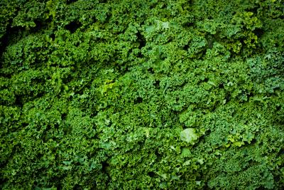Green Kale Fresh Produce Photo Poster Print Prints
