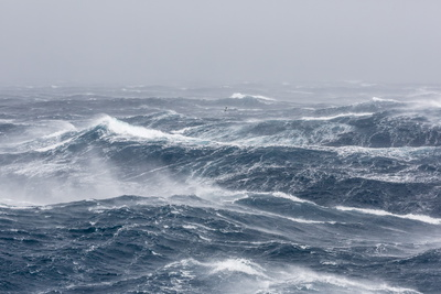 Gale Force Westerly Winds Build Large Waves in the Drake Passage, Antarctica, Polar Regions Fotografisk tryk af Michael Nolan