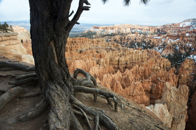Bryce Canyon National Park, Utah, United States of America, North America Photographic Print by Ethel Davies