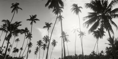 Palm Trees on the Beach, Morro De Sao Paulo, Tinhare, Cairu, Bahia, Brazil Photographic Print by  Panoramic Images