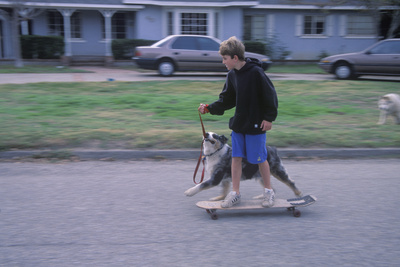 Kids on Skateboard Being Pulled by Dog in Oak View CA Photographic Print