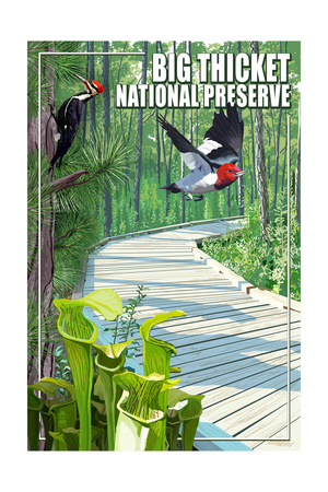 Big Thicket National Preserve, Texas Posters by  Lantern Press