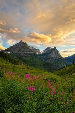 Glacier National Park, Montana - Sunset and Flowers Posters by  Lantern Press
