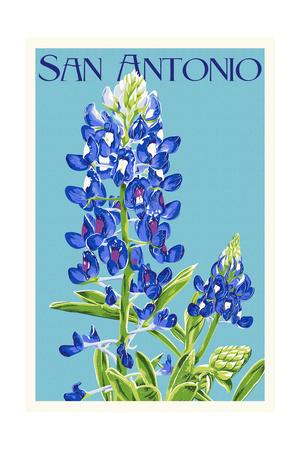 San Antonio, Texas - Bluebonnet Prints by  Lantern Press