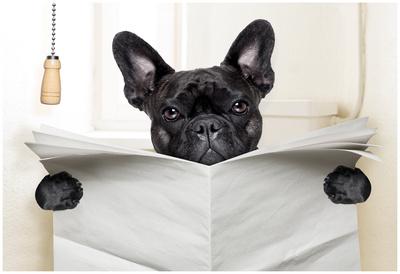 Dog Toilet Poster by Javier Brosch