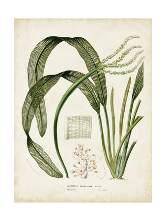 Tropical Grass I Poster by  Vision Studio