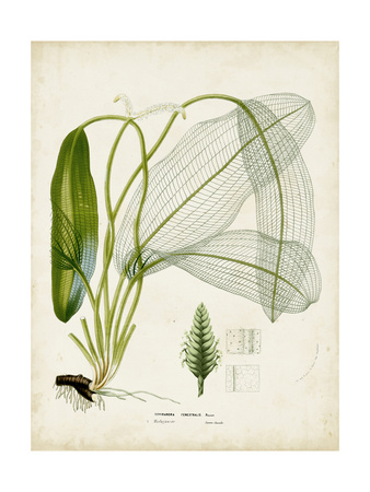 Tropical Grass II Prints by  Vision Studio