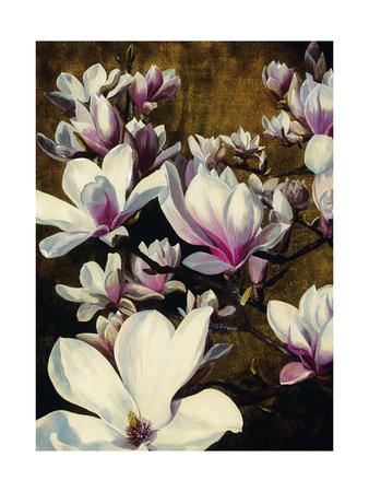 Magnolia Silk Giclee Print by Sarah Caswell