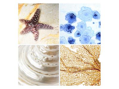 Starfish - Sunset Prints