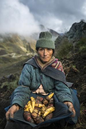 A Farmer Harvests Varieties of Potatoes to Sell at Market Fotoprint av Jim Richardson