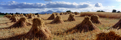 Traditional Hay Stacks in County Down, Northern Ireland Photographic Print by Chris Hill